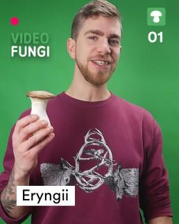 VideoFungi_01_Eryngii