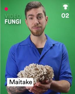 VideoFungi_2 Maitake