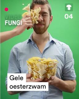 VideoFungi_3_gele-oesterzwam