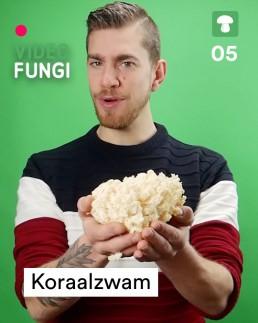 VideoFungi 5 Koraalzwam