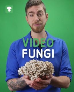 VideoFungi_ ken jouw paddenstoel
