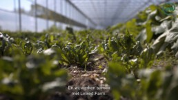 Linked.Farm Thumbnail 07